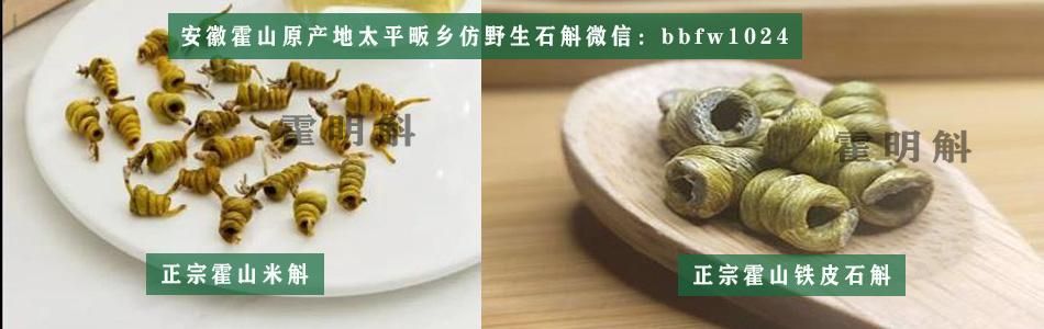 霍山石斛,安徽霍山铁皮石斛