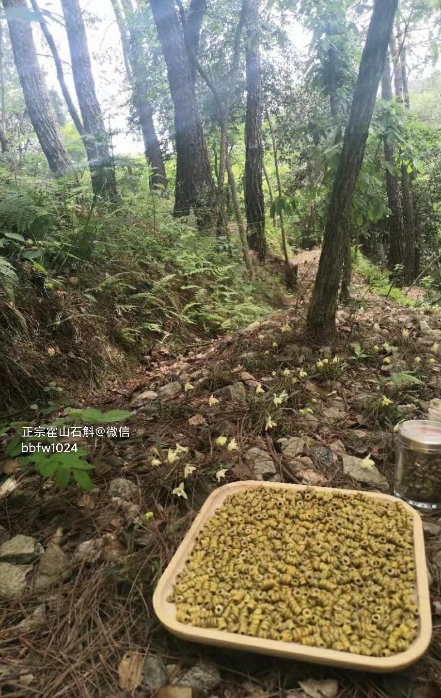 铁皮石斛浑身是宝哪里的石斛效果好,霍山铁皮石斛和其他地区的有什么区别